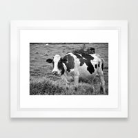 Cow  Framed Art Print