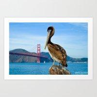 Pelican & Golden Gate Art Print