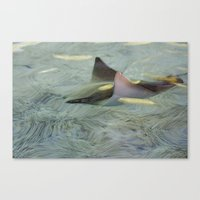 Long Days Of Summer Canvas Print