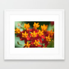 Exotic Flower  411 Framed Art Print
