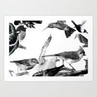 A Volery of Birds Art Print