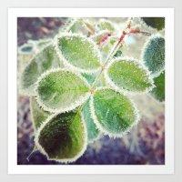 Frosty Rose Art Print