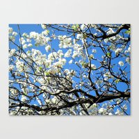 Dogwood In The Sky Canvas Print