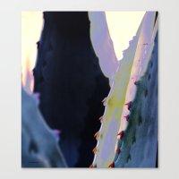 Agave Heart Canvas Print