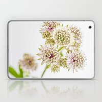 Astrantia major Laptop & iPad Skin