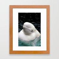 Beluga Whale Framed Art Print