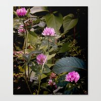 (c)lover of the shadow Canvas Print