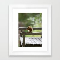 Red Squirrel Snack Time Framed Art Print
