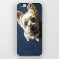 Yorkie iPhone & iPod Skin