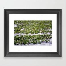 Frog crossing  Framed Art Print