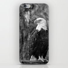 Haliaeetus leucocephalus iPhone & iPod Skin