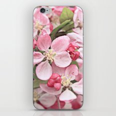 Cherry Blossoms iPhone & iPod Skin