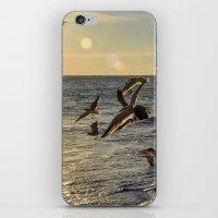 Birds in Flight iPhone & iPod Skin