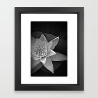 Nature star Framed Art Print