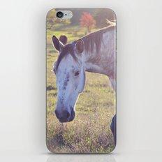 Star Horse iPhone & iPod Skin