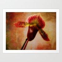 Ruby Lady Slipper Orchid Art Print