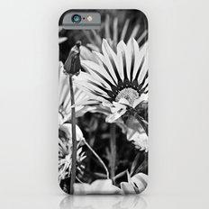 Desert Daisies (bnw) - Daisy Project in memory of Mackenzie iPhone 6s Slim Case