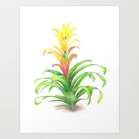 Bromeliad - Tropical Pla… Art Print