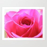 Pink Roses #3 Art Print