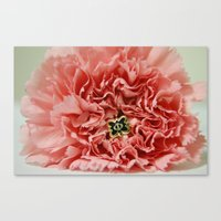 Phi Pin and Carnation Canvas Print