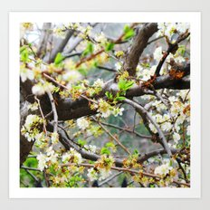 it was spring Art Print