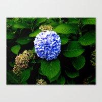 Blue Flower (Edited) Canvas Print