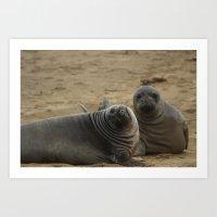 two elephant seal pups Art Print