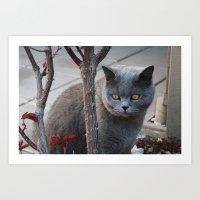 Grey Cat Art Print