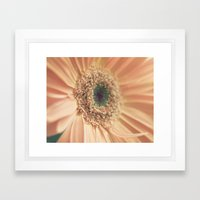 Daisy 011 Framed Art Print