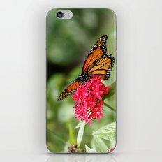 Papillon III iPhone & iPod Skin