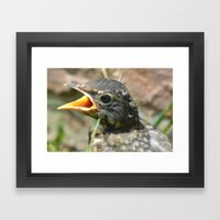 baby bird Framed Art Print