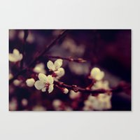 Deep Blossom Canvas Print