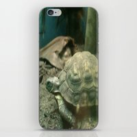 Giant Turtle iPhone & iPod Skin