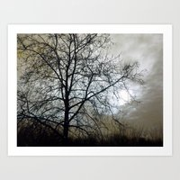 Winter Sky II Art Print