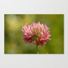 Pink Clover 5033 Canvas Print