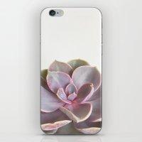 Purple Succulent iPhone & iPod Skin
