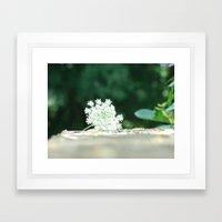 Queen Anne's Lace w/ bokeh Framed Art Print
