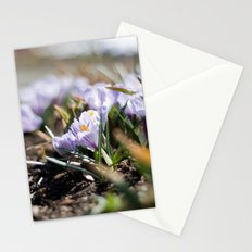Spring Light Stationery Cards