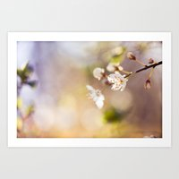 In The Morning Light Art Print