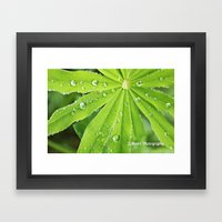 Lupines Framed Art Print