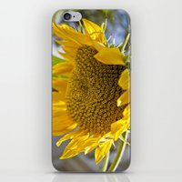 Take Cover [SUNFLOWER] iPhone & iPod Skin