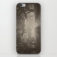 Avenue of Oaks iPhone & iPod Skin