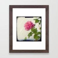 A Single Rose Framed Art Print