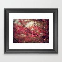 Crimson Blush Framed Art Print