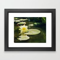Lotus Blossom Framed Art Print