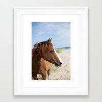 Horse ii Framed Art Print