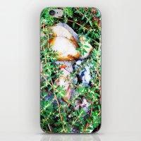 Forgotten Garden 1 iPhone & iPod Skin