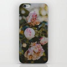 White Roses iPhone & iPod Skin