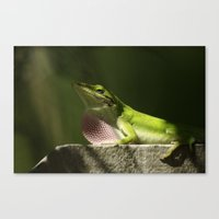 Mating Dance Canvas Print
