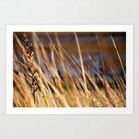 Into The Dunes Art Print
